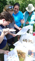 NWA Democrat-Gazette/FLIP PUTTHOFF <br /> Angela Danovi with Ozarks Water Watch (third from left) helps Stream Smart volunteers     July 2016    identify aquatic insects they collected from Prairie Creek.