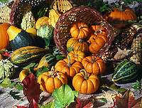 An autumn still-life with pumpkins, gourds and various fall foliage. Thanksgiving. Harvest.