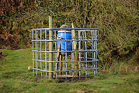 Pheasant feeder at Landgen, Dunsop Bridge, Lancashire.
