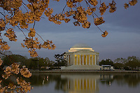 Jefferson Memorial framed by cherry blossoms before sunrise, Washington, DC