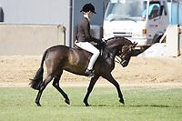 Pony Mare NE 12.2hh