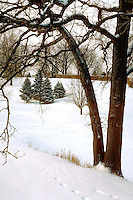 Town and Country golf course in a snowy winter scene.  St Paul Minnesota USA