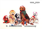 GIORDANO, CHRISTMAS ANIMALS, WEIHNACHTEN TIERE, NAVIDAD ANIMALES, paintings+++++,USGI2529,#XA# dogs,puppies