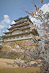 Cherry blossoms frame the main donjon, Daitenshu, at Himeji Castle