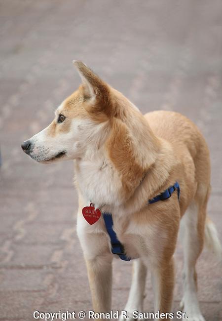 DOG SHOW ENTRANT (2)