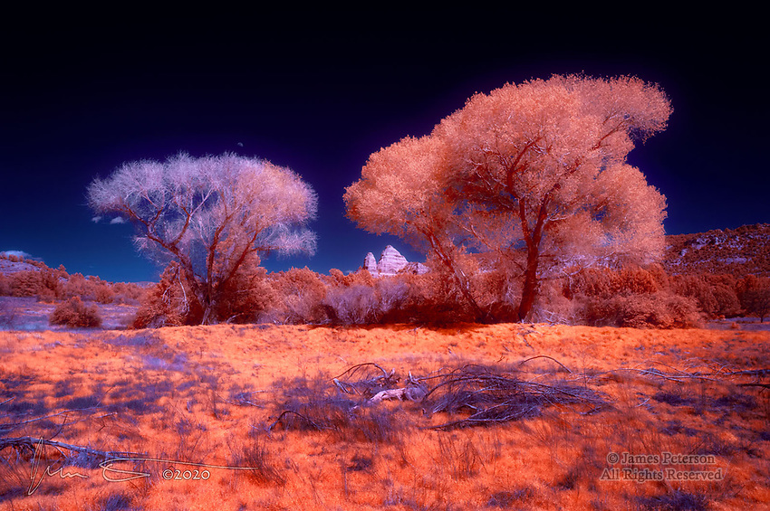 Springtime at Turkey Creek Tank (Infrared).  These are the (false) colors of an infrared photo captured recently along a trail outside of Sedona, Arizona.  I processed the image to resemble the look of Kodak's old Aerochrome color infrared film (though the foliage here doesn't quite have the deep red hue the film, long since discontinued, would have given us).  The new leaves on these ancient cottonwoods have the characteristic infrared glow.  The tree on the left appears to be nearing the end of its life, possibly due to a relative absence of water after the dam creating this tank was breached many years ago.<br /> <br /> Image ©2020 James D. Peterson