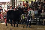 Jr Livestock Auction Mariposa Fair 2013_gallery