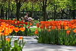 BJ 4.24.17 Main Quad 2523.JPG by Notre Dame Photography