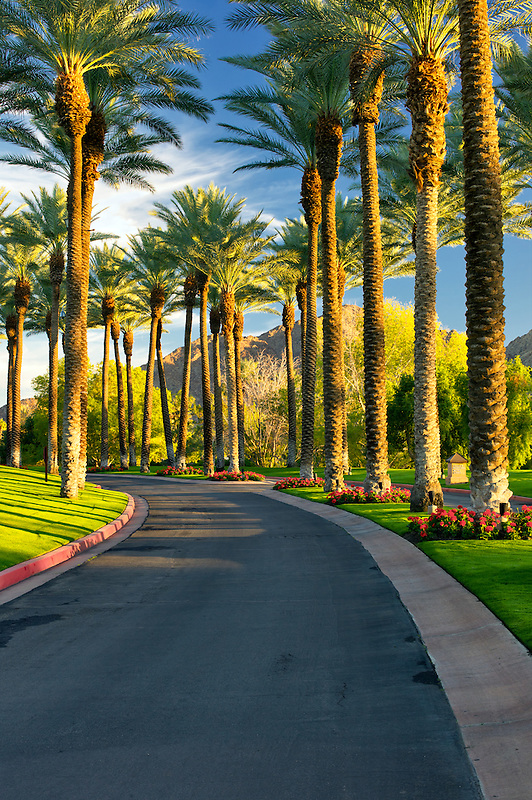 Palm tree lined road. Palm Desert, California