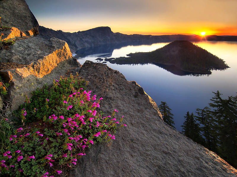 Sunrise and penstemon. Crater Lake National Park, Oregon