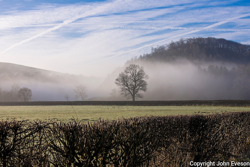Trees in the mist, Whitewell, Lancashire.