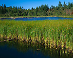 Foulweather Bluff Preserve, WA    <br /> Brackish marsh and lagoon on the Kitsap Peninsula's Cape Foulweather.  A Nature Conservancy Preserve