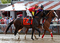Good Samaritan (no. 7) in the Post Parade for the  Whitney Stakes (Grade I), Aug. 4, 2018 at the Saratoga Race Course, Saratoga Springs, NY.  Ridden by Jose Ortiz  (Bruce Dudek/Eclipse Sportswire)