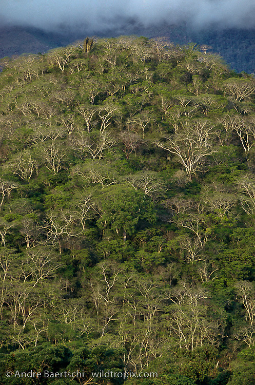 Inter-Andean tropical dry forest along upper Tuichi River, dry season, Madidi National Park, Bolivia.
