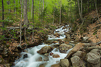 small stream in the Flume Gorge, White Mountains, NH