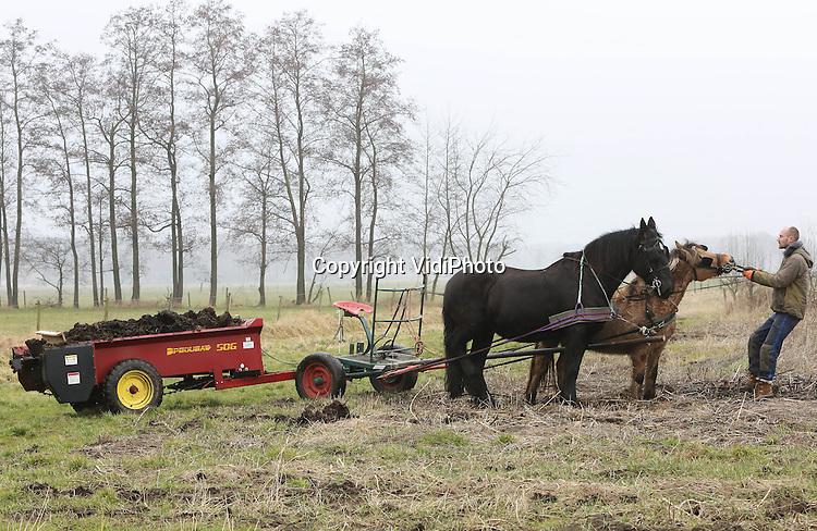 Foto: VidiPhoto..HALLE - Met een meststrooier zoals de Amish gebruiken in de VS en twee paarden er voor, is biologisch akkerbouwer Fred Beijleveld van boerderij Ruimzicht in Halle (Gld.) dinsdag begonnen met een nieuw wijze van landbewerking. In Nederland is dit vrij nieuw. In Duitsland werken al zeker honderd biologische boeren op deze manier. De paarden, afkomstig van een loonwerker die gespecialiseerd is in paardentractie, moesten duidelijk nog even wennen aan de klus. Beijleveld is overgestapt op paardenkrachten omdat op deze wijze de bodem minder verstoord wordt. Een beter bodemleven zorgt ook voor gezondere gewassen. Het is 40 jaar geleden dat er op Ruimzicht voor het laatst paarden aan het werk waren. Ruimzicht bestaat uit een veehouderij van eigenaar Gerjo Koskamp en de biologische tuinderij van Fred Beijleveld. Foto: De paarden zijn van 'loonwerker' Teun van Dijk uit Deventer..