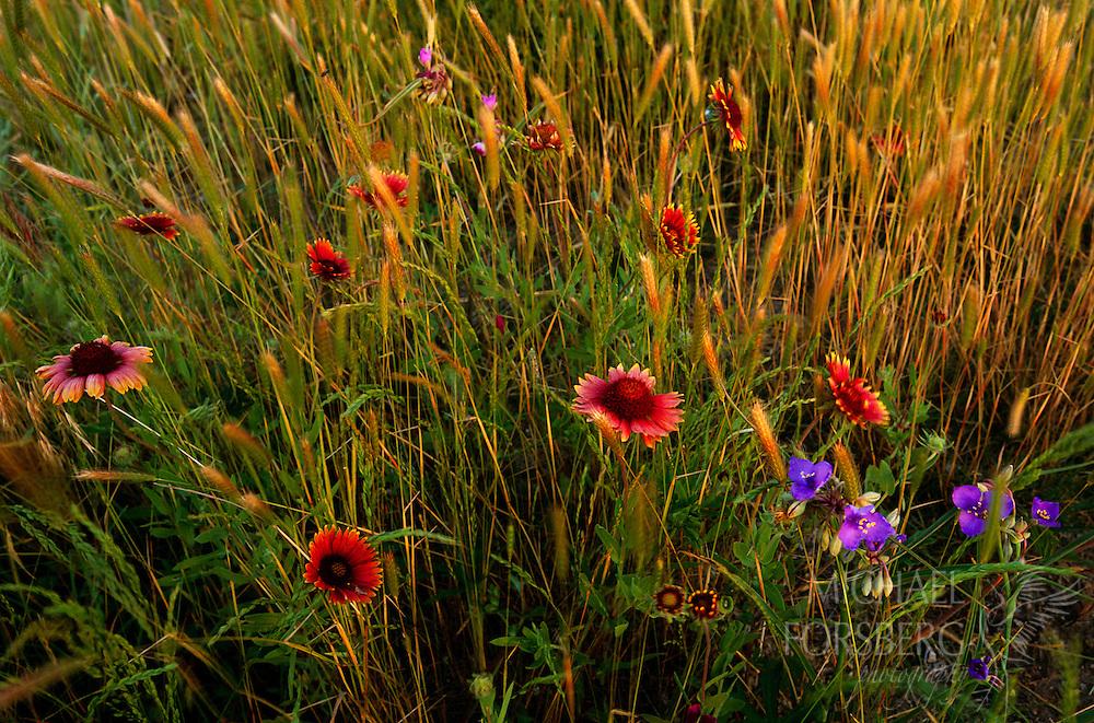 152 Wildflower Bouquet Michael Forsberg Photography