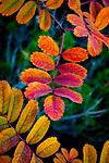 Wander: 2018 Autumn Pacific Northwest