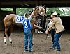 Havre De Grace winning The Obeah Stakes (gr3) at Delaware Park on 6/11/11