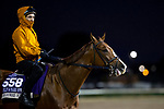 November 1, 2018: Highway Star, trained by Rodrigo A. Ubillo, exercises in preparation for the Breeders' Cup Filly & Mare Sprint at Churchill Downs on November 1, 2018 in Louisville, Kentucky. Alex Evers/Eclipse Sportswire/CSM