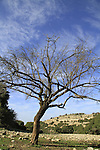 Israel, Upper Galilee, Wadi Moran at Mount Meron