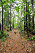 Pemigewasset Wilderness - Thoreau Falls Trail near the East Branch of the Pemigewasset River in Lincoln, New Hampshire. This trail follows the old East Branch & Lincoln Railroad bed, which was a logging railroad in operation from 1893-1948.