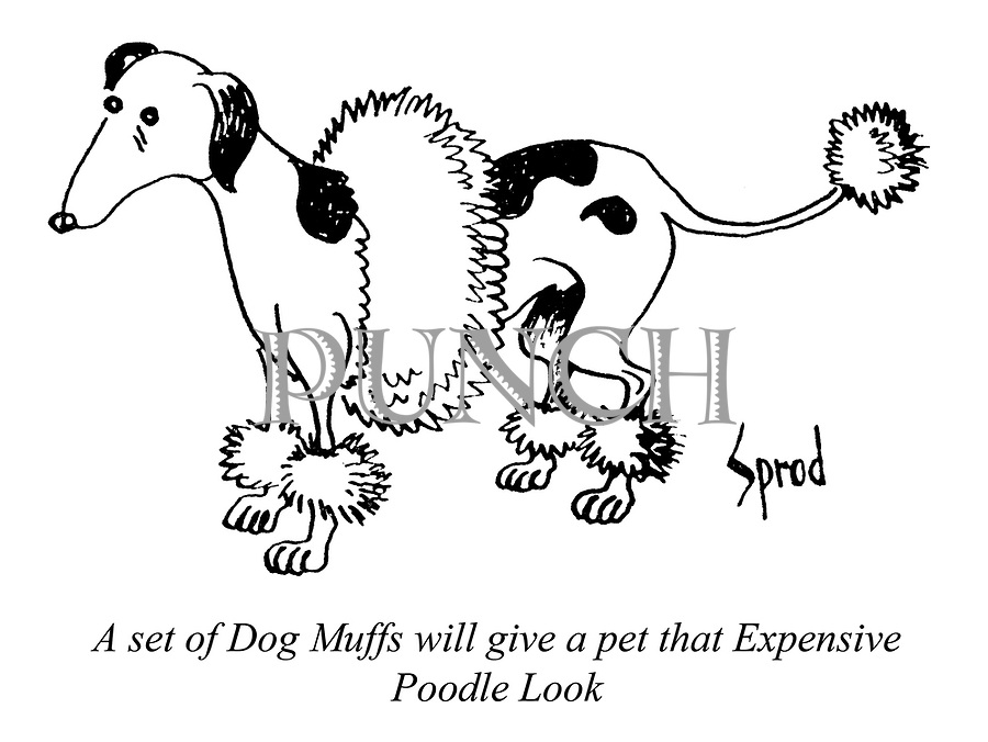 A set of Dog Muffs will give a pet that Expensive Poodle Look