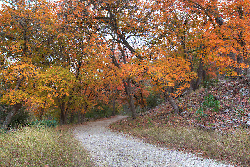One of my favorite walks in the Hill Country of Texas is the East Trail at Lost Maples State Park in November. If you time it right, the maple and oak will be changing from green to orange and red. Parts of the trail lead through forests straight out of fairy tales.
