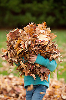Girl carrying armful of fall leaves