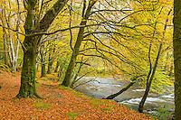 The River Coe in autumn