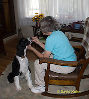 0801-0822  English Springer Spaniel Therapy Dog with Elderly Woman, Canis lupus familiaris © David Kuhn/Dwight Kuhn Photography.