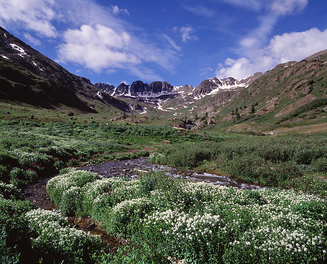 Subalpine stream flowing through summer wildflowers in American Basin, Rocky Mtns, CO