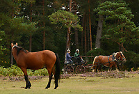 BNPS.co.uk (01202 558833)<br /> Pic: ZacharyCulpin/BNPS<br /> <br /> Horse Play....<br /> <br /> A New Forest Pony watches on as competitors race during the New Forest Heavy Horse relay.<br /> <br /> The relay is in its 15th year and the runners and riders compete on an 30 Kilometre course around the picturesque Bolderwood in the New Forest, Hampshire