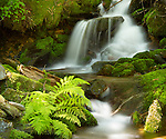 Idaho, North, St. Joe National Forest. A tributary to the Little St. Joe River tumbles through a shady forest setting.