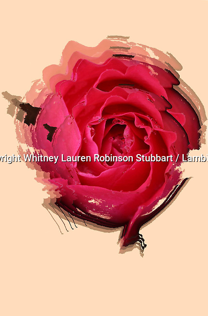 Digital Effect Collections, Digital Abstract Photography, Digital Art Photography, Digital Effect Photography, Abstract Art Photography, Florescent, tapestry, photo painting, image manipulation, artistic photography, flowers, guitar, colors, red, yellow, blue, green, pink, purple, black, teal, Roses, snow roses, snow, duplications ,mirrored, etc.