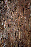 Close up photo of the bark on the side of a Eastern Red Cedar tree.