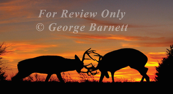 Image Previously Published. Contact George Barnett Photography for Details. North American Hunter 2003