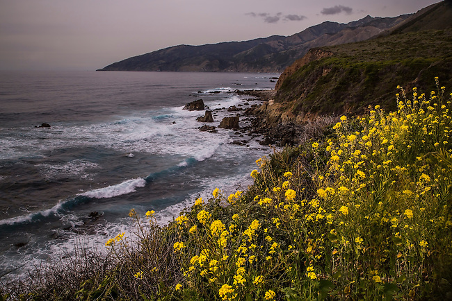 Flowers bloom along the California Coastline near Big Sur