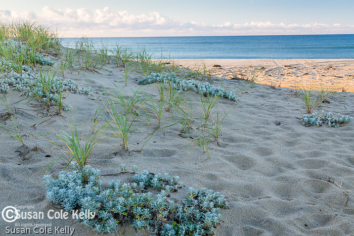 Morning at Katama Beach, Edgartown, Marthas Vineyard, Massachusetts, USA