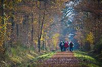 Europe/France/Centre/41/Loir-et-Cher/Sologne/Chambord: randonneurs dans la Forêt à l'automne du Parc de Chambord - Domaine National de Chambord // Europe/France/Centre/41/Loir-et-Cher/Sologne/Chambord:Forest in the autumn of the Park of Chambord - Hikers