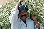 Pakistani man working in his fields in Mirpurkhas, Sindh. This area has long been plagued by huge landowners forcing poor families into slavery.