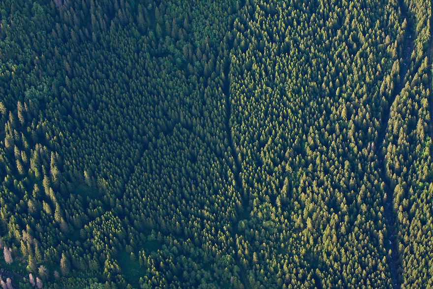 Aerial view of thick mountain forest with Spruce (Picea abies) and Ash (Sorbus aucuparia). Western Tatras, Slovakia. June 2009. Mission: Ticha