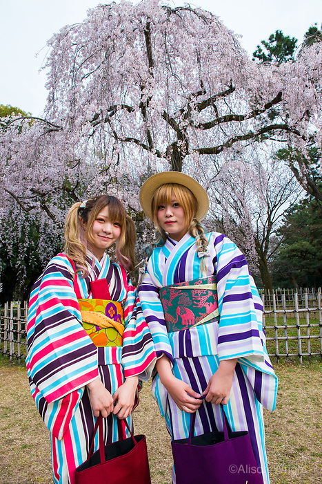 Japan, Kyoto. Japan, Kyoto. Two women in striped kimonos enjoying the cherry blossoms in Kyoto Gyoen National Garden. Model released