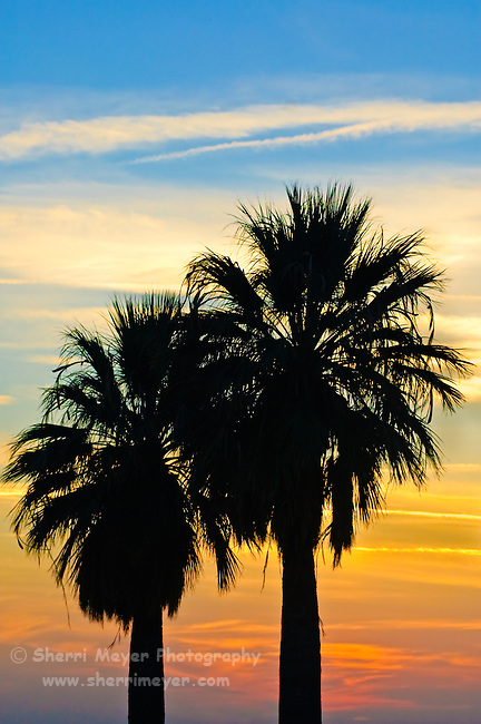 Palm Tree silhouette at Panorama Park, Bakersfield, California.