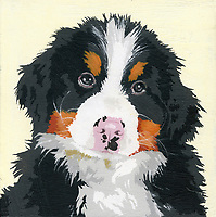 Portrait of Bernese Mountain Dog puppy