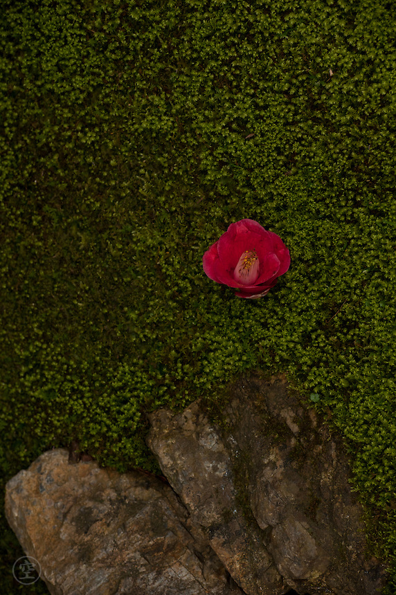 A fallen camellia flower punctuates the moss and rocks of a Japanese garden.