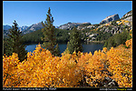 Autumn aspen trees above, Bear Lake, RMNP.