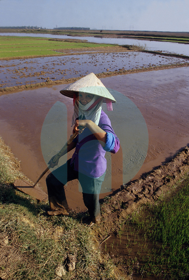 December 6th 1993-PHI LA, NORTHERN VIETNAM-A woman prepares rice paddies for planting in Northern VietnamÕs Phi La.  Photo by Daniel J. Groshong/Tayo Photo Group