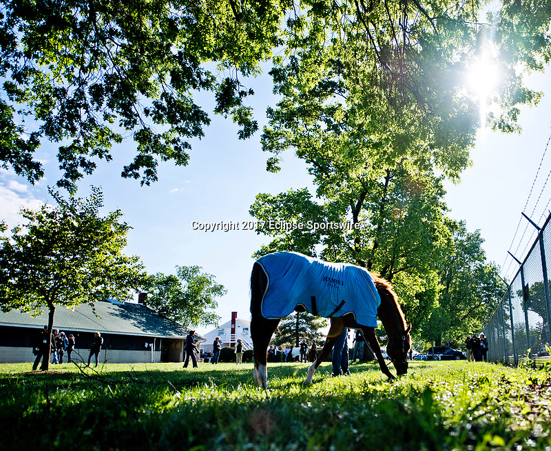 LOUISVILLE, KENTUCKY - MAY 02: Irish War Cry, owned by Isabelle de Tomaso and trained by H. Graham Motion, grazes after jogging in preparation for the Kentucky Derby at Churchill Downs on May 2, 2017 in Louisville, Kentucky. (Photo by Scott Serio/Eclipse Sportswire/Getty Images)