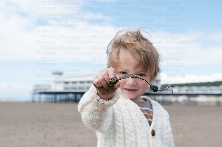 A young boy holding seaweed